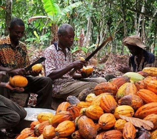Kuapa Kokoo Remains Committed To Supporting Its Members Earn Decent Livelihood